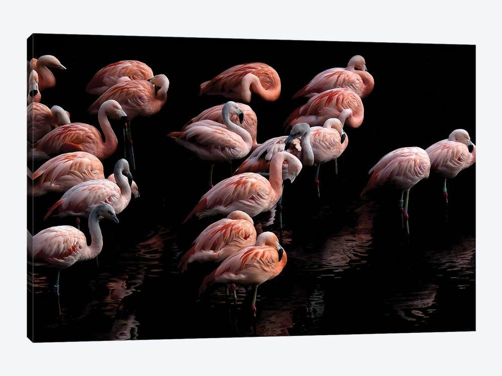 Flamingo by Paul Neville 1-piece Art Print
