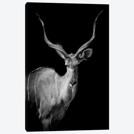 Kudu I Canvas Print #PNE21} by Paul Neville Art Print