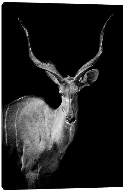 Kudu I Canvas Art Print