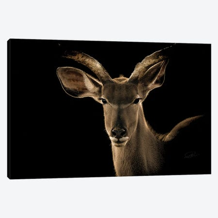 Kudu II Canvas Print #PNE22} by Paul Neville Canvas Print