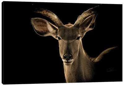 Kudu II Canvas Art Print