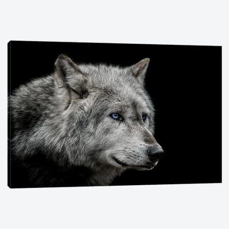 Old Blue Eyes Canvas Print #PNE28} by Paul Neville Canvas Art Print