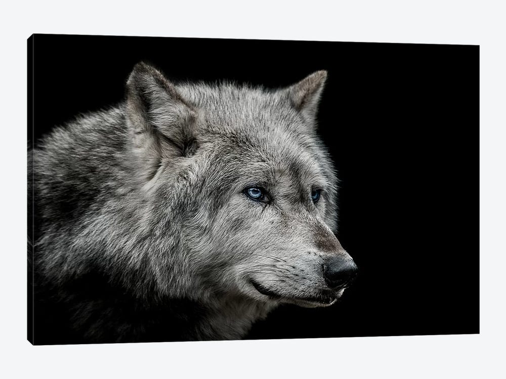 Old Blue Eyes by Paul Neville 1-piece Art Print