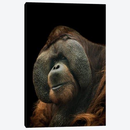 Orangutan Canvas Print #PNE29} by Paul Neville Canvas Art Print