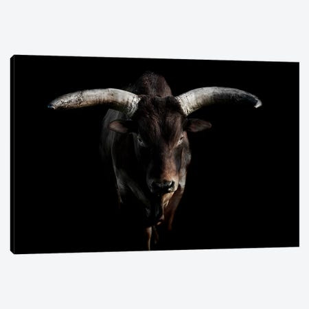 Ankole Cattle Canvas Print #PNE2} by Paul Neville Canvas Art Print