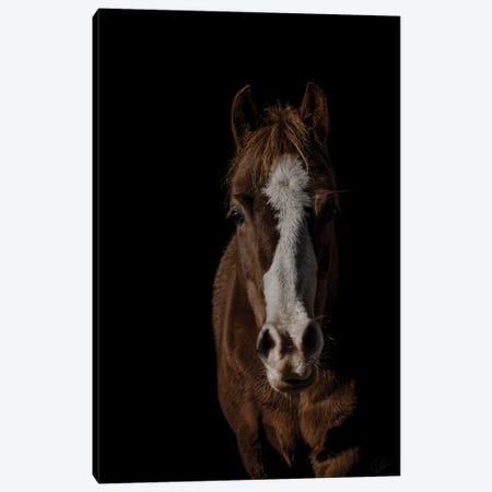 Pony Canvas Print #PNE31} by Paul Neville Canvas Wall Art