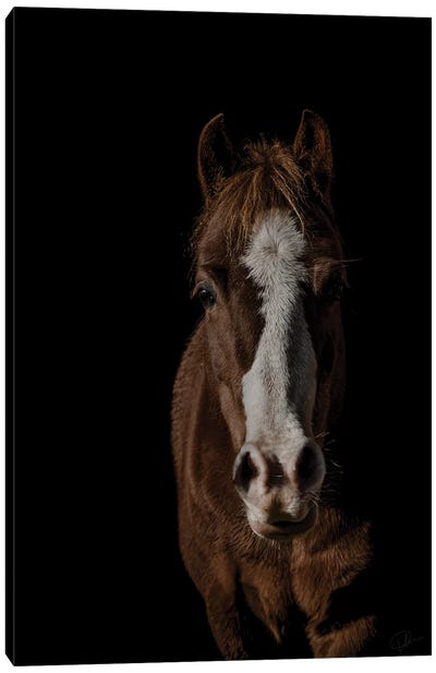 Pony Canvas Art Print