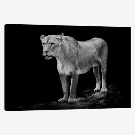 Queen Canvas Print #PNE35} by Paul Neville Canvas Print