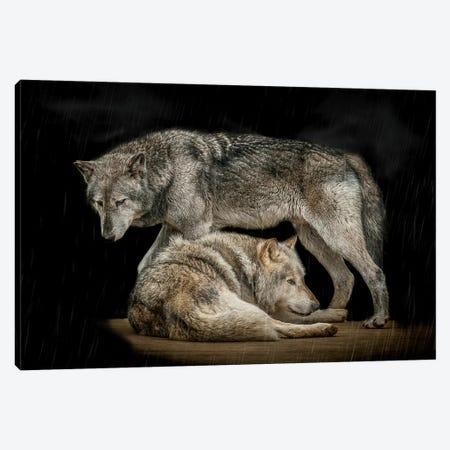 Shelter Canvas Print #PNE38} by Paul Neville Canvas Art