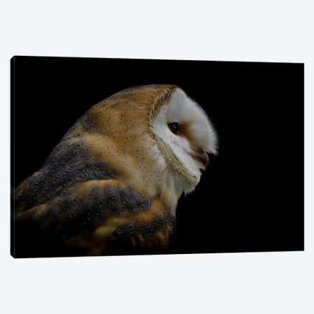 Barn Owl Canvas Print #PNE3} by Paul Neville Canvas Print