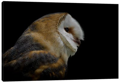 Barn Owl Canvas Art Print