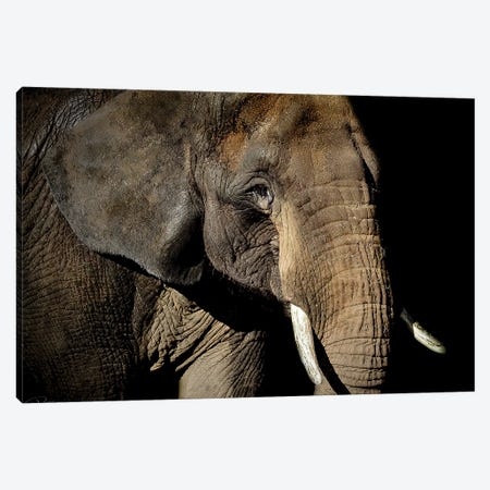 Strength Canvas Print #PNE40} by Paul Neville Canvas Art Print