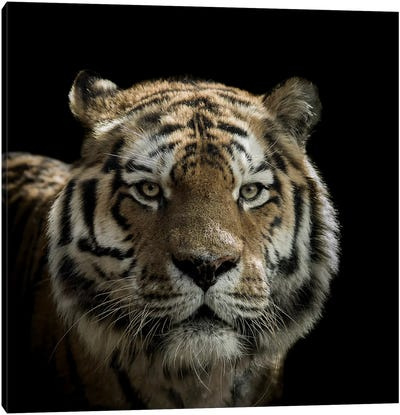 Tiger Canvas Art Print