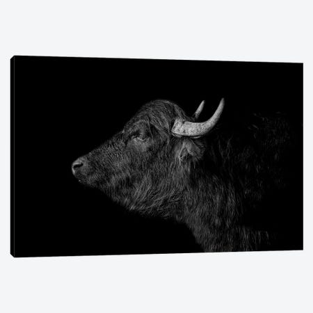 Buffalo Canvas Print #PNE5} by Paul Neville Canvas Art
