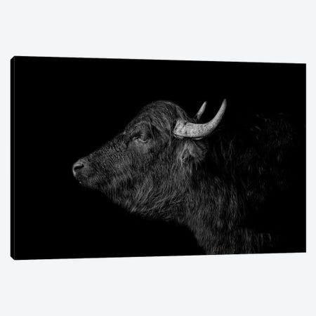 Buffalo Canvas Print #PNE5} by Paul Neville Canvas Art