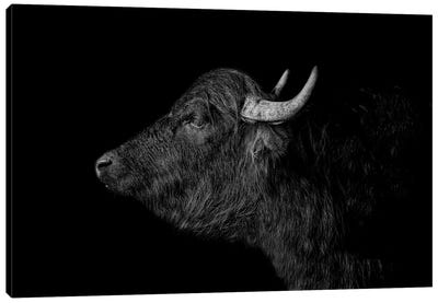 Buffalo Canvas Art Print