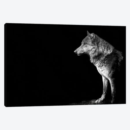 Wolf I Canvas Print #PNE61} by Paul Neville Canvas Print