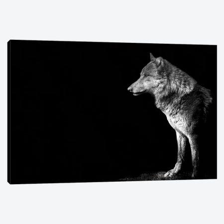 Wolf I Canvas Print #PNE61} by Paul Neville Canvas Print