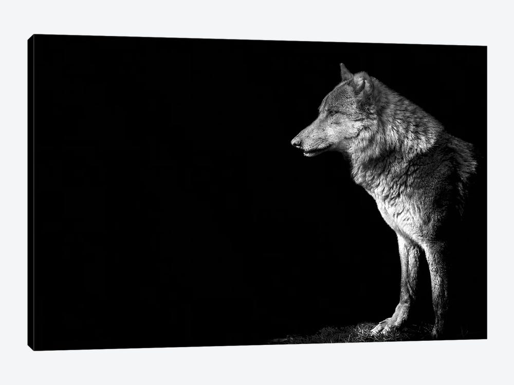 Wolf I by Paul Neville 1-piece Canvas Wall Art