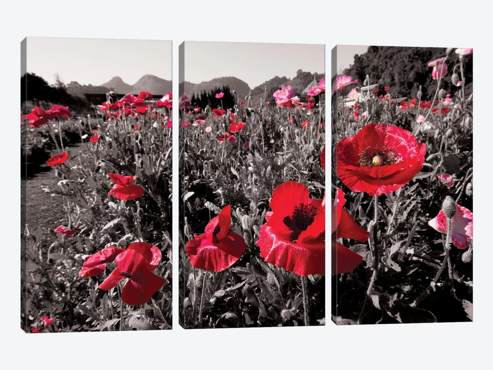 Red Poetry by 5by5collective 3-piece Canvas Print