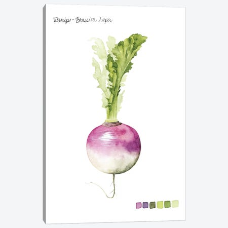 Root Vegetable VI Canvas Print #POP102} by Grace Popp Art Print
