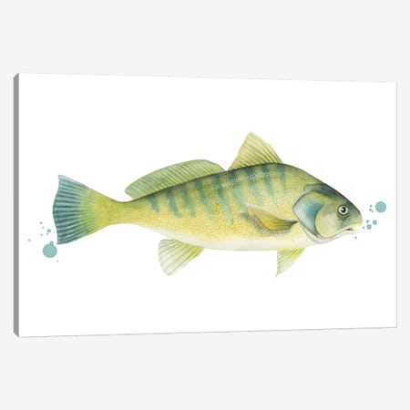 Chromatic Catch I Canvas Print #POP1129} by Grace Popp Canvas Wall Art