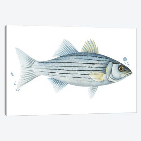 Chromatic Catch III Canvas Print #POP1131} by Grace Popp Canvas Art Print