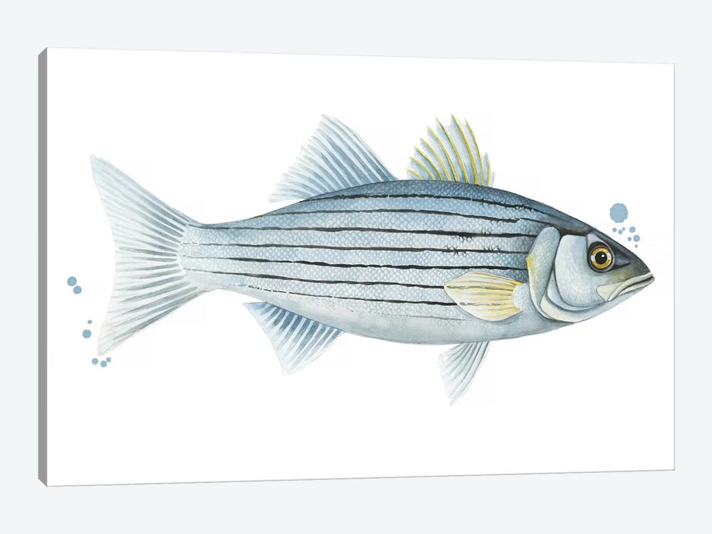 Chromatic Catch III by Grace Popp 1-piece Canvas Art