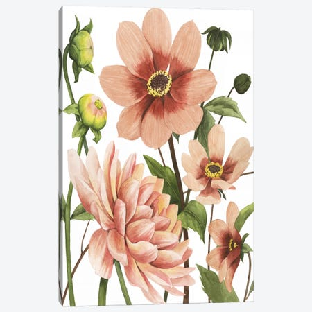 Dahlia Spell II Canvas Print #POP1142} by Grace Popp Canvas Art
