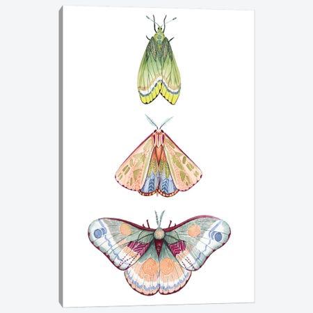 Moth Fairies II Canvas Print #POP1175} by Grace Popp Canvas Artwork