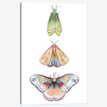 Moth Fairies II Canvas Print #POP1175} by Grace Popp Canvas Artwork