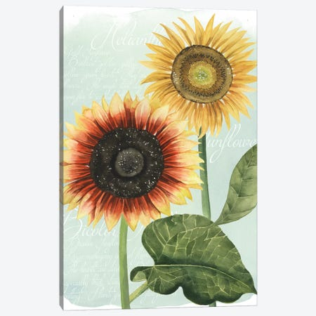 Sunflower Study I Canvas Print #POP121} by Grace Popp Canvas Art Print