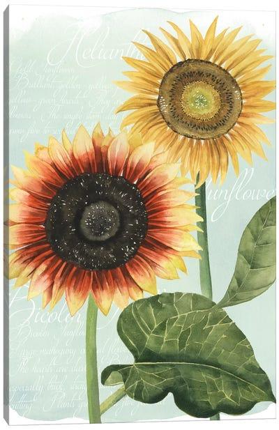 Sunflower Study I Canvas Print #POP121