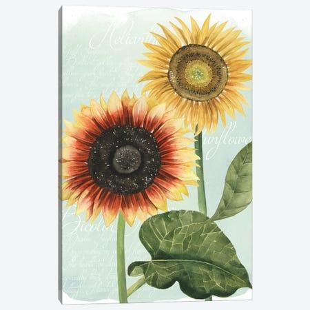 Sunflower Study I Canvas Print #POP121} by Grace Popp Canvas Art Print