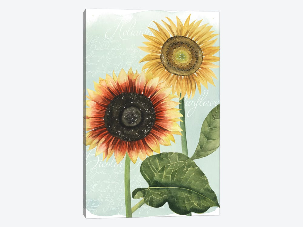 Sunflower Study I by Grace Popp 1-piece Canvas Art