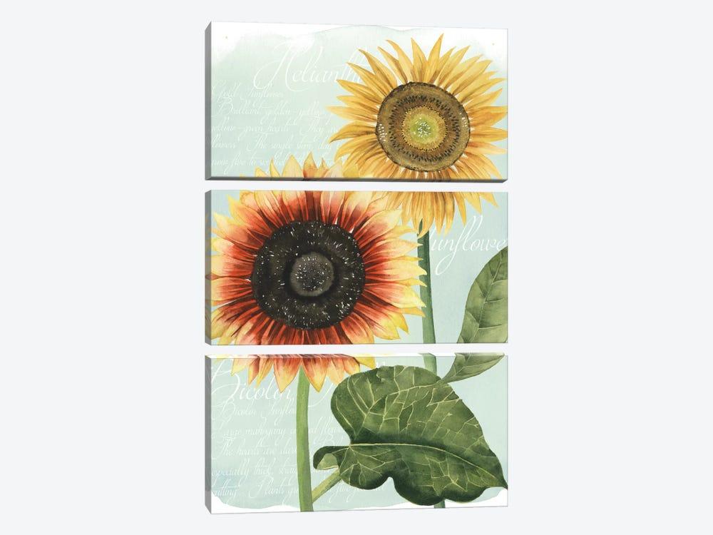 Sunflower Study I by Grace Popp 3-piece Canvas Art