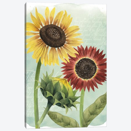 Sunflower Study II Canvas Print #POP122} by Grace Popp Art Print