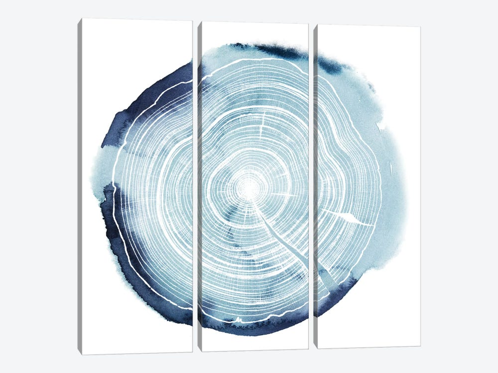 Tree Ring Overlay III by Grace Popp 3-piece Canvas Wall Art