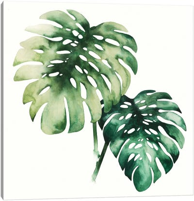 Tropical Plant II Canvas Art Print