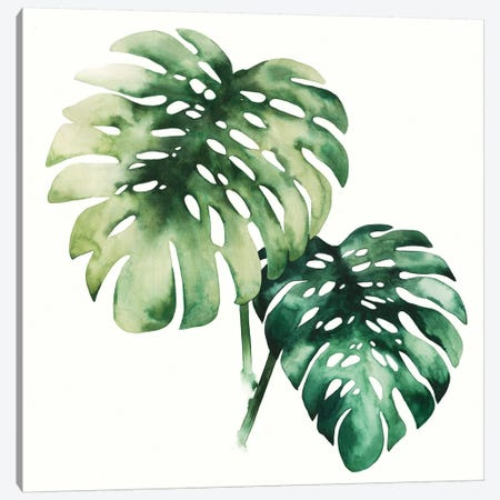 Tropical Plant II Canvas Print #POP130} by Grace Popp Canvas Artwork
