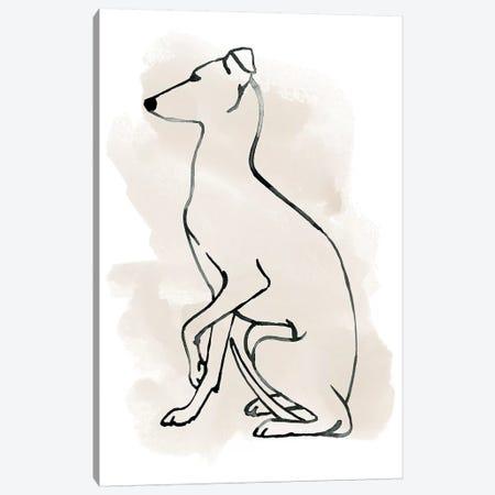 Greyhound Sketch II Canvas Print #POP1371} by Grace Popp Canvas Art Print