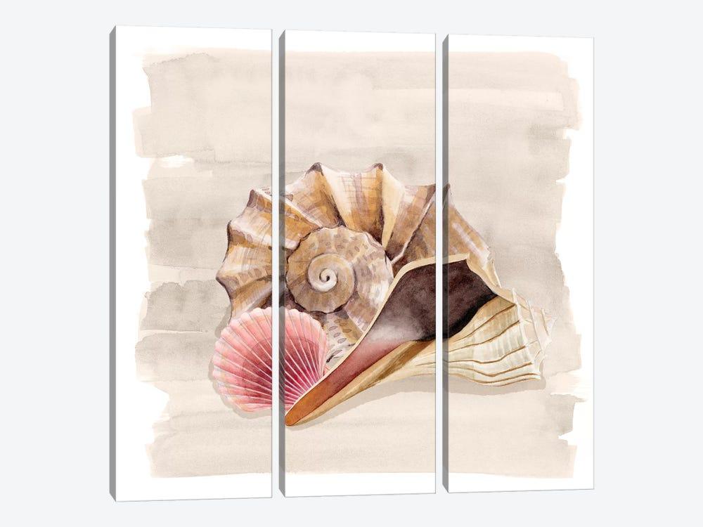 Ocean Keepsake II by Grace Popp 3-piece Art Print