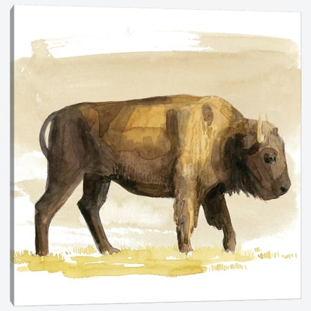 Bison Watercolor Sketch I Canvas Print #POP1470} by Grace Popp Canvas Art