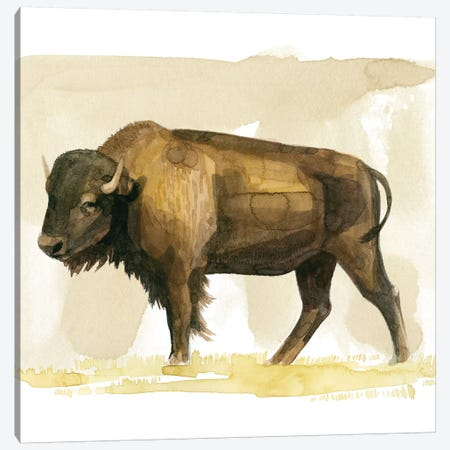 Bison Watercolor Sketch II Canvas Print #POP1471} by Grace Popp Canvas Art