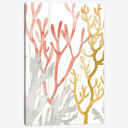 Desert Coral I Canvas Print #POP1492} by Grace Popp Canvas Wall Art
