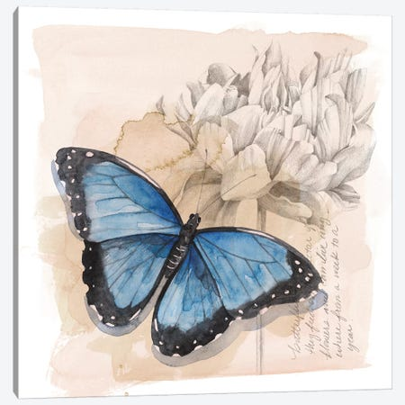Shadow Box Butterfly II Canvas Print #POP1527} by Grace Popp Art Print