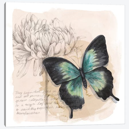 Shadow Box Butterfly III Canvas Print #POP1528} by Grace Popp Canvas Wall Art