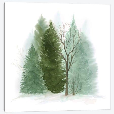 Walk in the Woods II Canvas Print #POP1554} by Grace Popp Canvas Wall Art