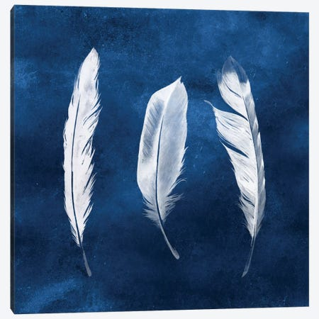Cyanotype Feathers II Canvas Print #POP180} by Grace Popp Canvas Art Print