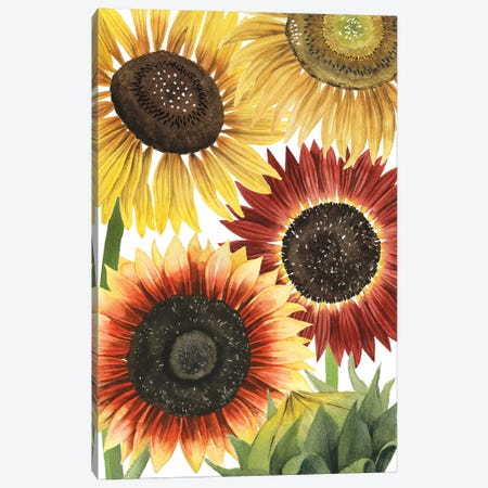 Sunflower Harvest Collection B Canvas Print #POP1814} by Grace Popp Canvas Print